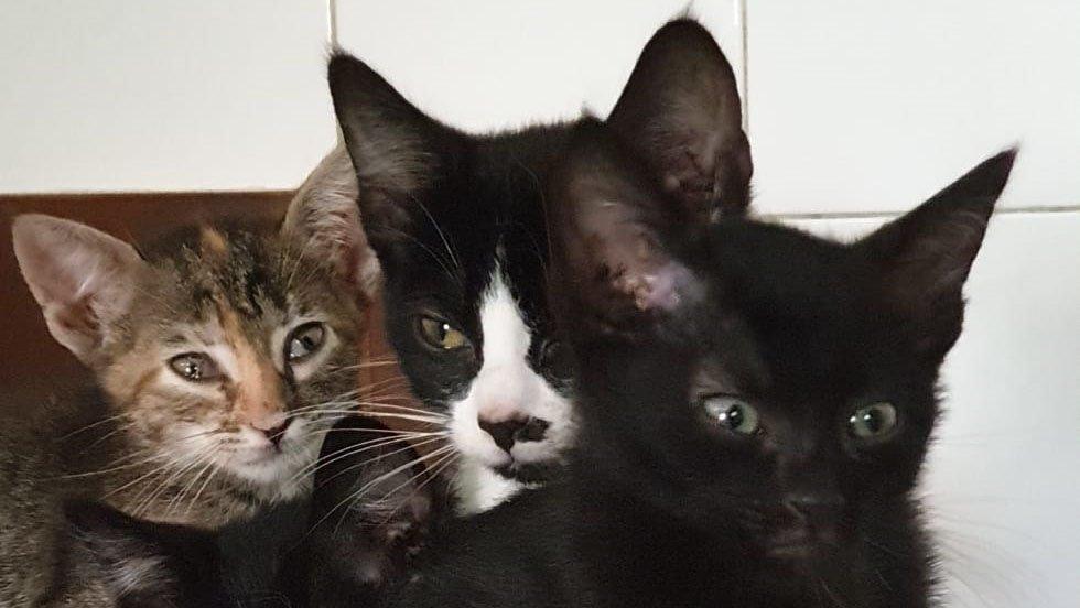 Vecina con 40 gatos: A la espera de la aprobación de un CES